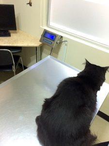 clinica-veterinaria-traducciones-profesionales
