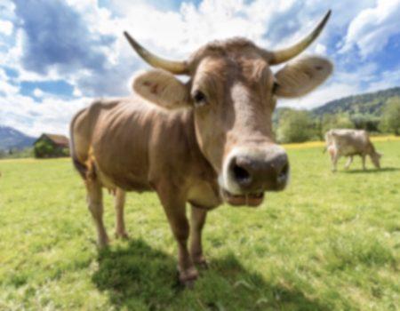 Traduction agroalimentaire : quelles sont ses spécificités ?